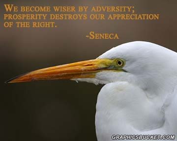 We Become Wiser By Adversity, Prosperity Destroys Our Appreciation Of The Right. - Seneca