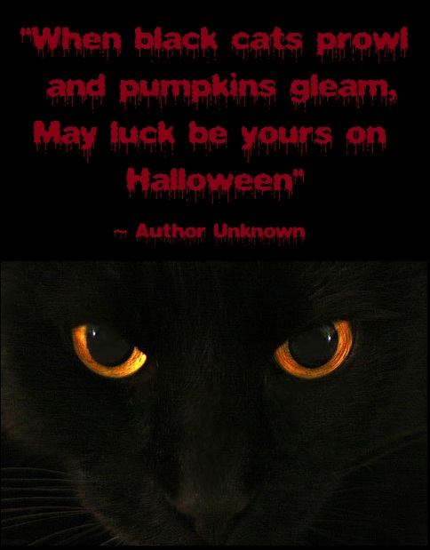 """"""" When Black Cats Prowl And Pumpkins Gleam, May Luck Be Yours On Halloween """""""