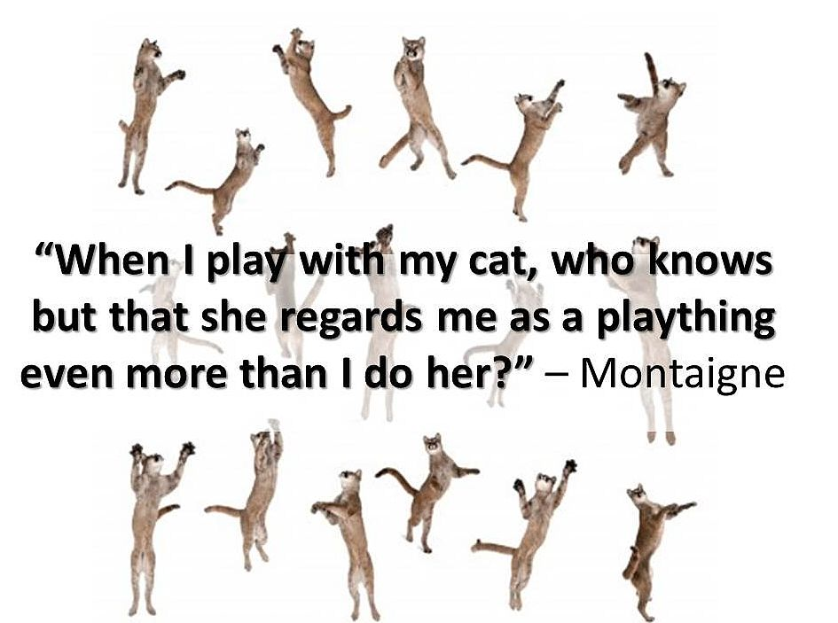 """"""" When I Play With My Cat, Who Knows But That She Regards Me As A Plaything Even More Than I Do Her """" - Montaigne"""