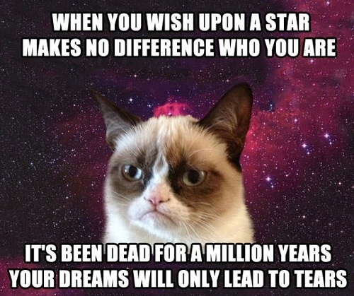 When You Wish Upon A Star Makes No Difference Who You Are It's Been Dead For A Million Years Your Dreams Will Only Lead To Tears. ~ Cat Quotes