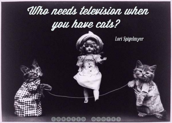Who Needs Television When You Have Cats - Lori Spigelmyer