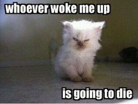 Whoever Woke Me Up Is Going To Die. ~ Cat Quotes