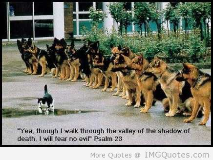 """ Yea, Though I Walk Through The Valley Of The Shadow Of Death. I Will Fear No Evil "" ~ Cat Quotes"
