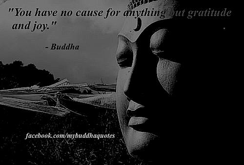 """"""" You Have No Cause For Anything But Gratitude And Joy """" - Buddha"""