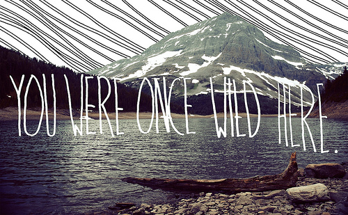 You Were Once Wild Here. ~ Camping Quotes