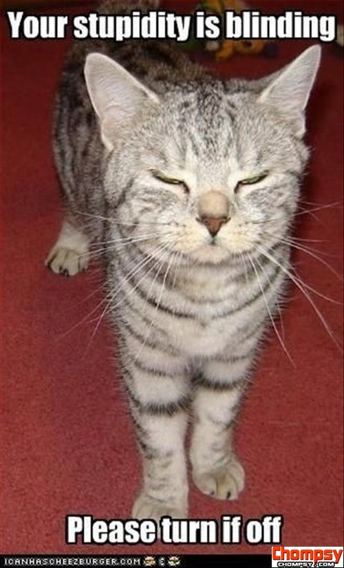 Your Stupidity Is Blinding, Please Turn It Off. ~ Cat Quotes