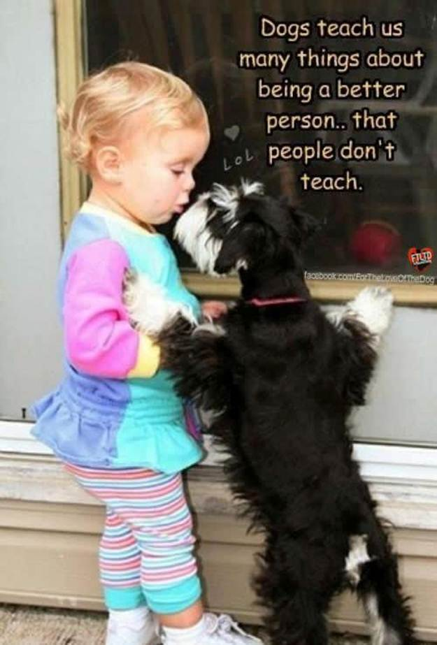 Dogs Teach Us Many Things About Being A Better Person That