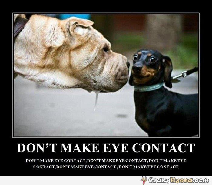 Dont Make Eye Contact Funny Dog Quote