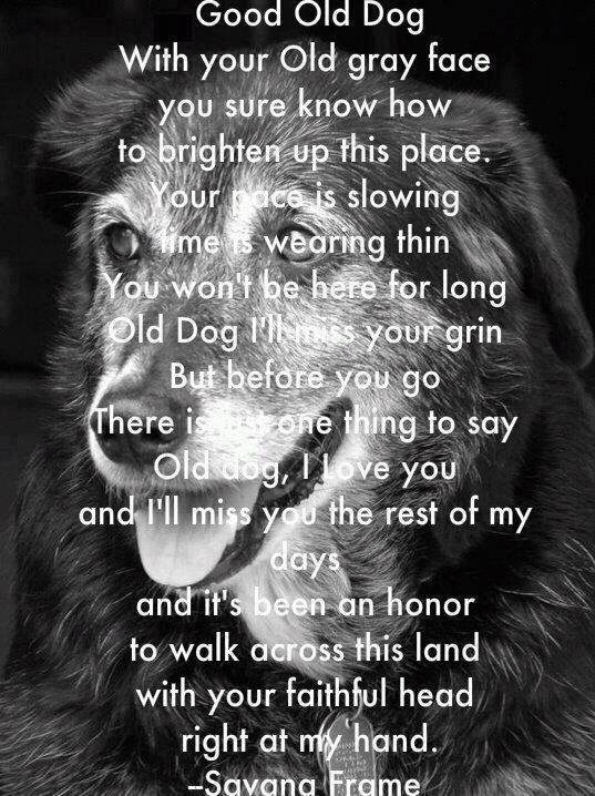 Good Old Dog With Your Old Gray Face You Sure Know How To Brighter