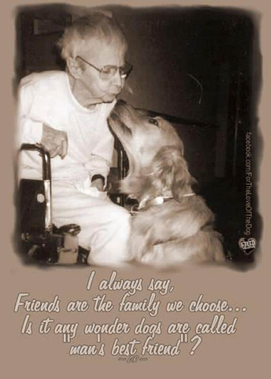 Best friend dog quotes quotesgram for Best dogs for companionship