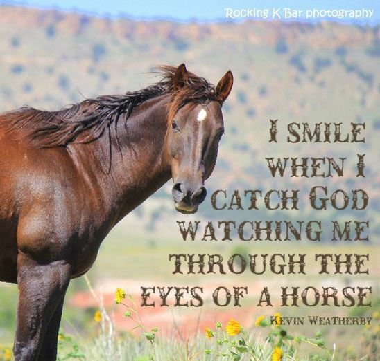 more quotes pictures under cowboy quotes html code for picture Horses Eyes Quotes