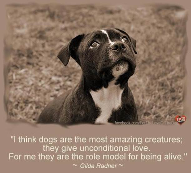 It S A Doggy Dog World Quote