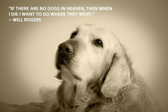 gallery for inspirational dog quotes death