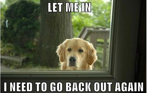 let-me-in-i-need-to-go-back-out-again.jpg