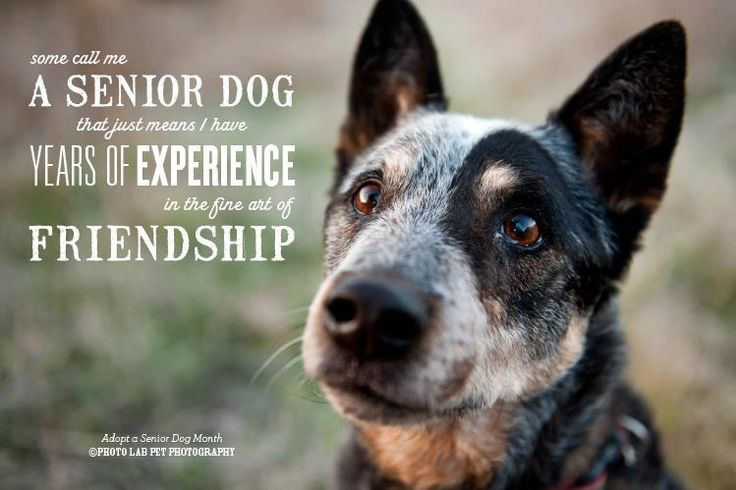 pics photos dog pictures inspirational quotes life quotes