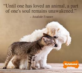 """""""Until One Has Loved As Animal, A Part Of One's Soul Remains Unawakened."""""""