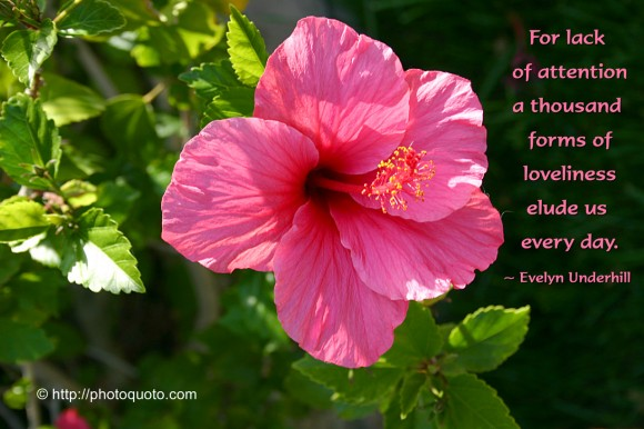 For A Lack Of Attention A Thousand Forms Of Loveliness Elude Us Every Day. - Evelyn Underhill