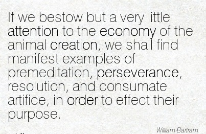 If We Bestow But A Very Little Attention To The Economy Of The Animal Creation.. - William Bartram
