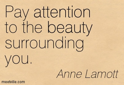 Pay Attention To The Beauty Surrounding You. - Anne Lamolt