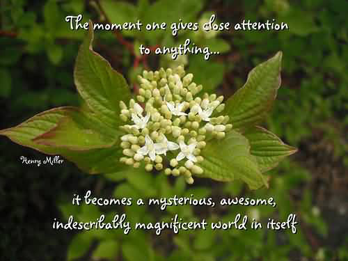 The Moment One Gives Close Attention To Anything It Becomes A Mysterious, Awesome, Indescribably Magnificent World In Itself.
