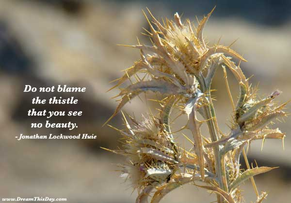 Do Not Blame The Thistle That You See No beauty. - jonathan Lockwood Huie