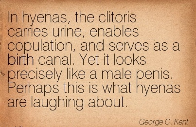 In Hyenas, The Clitoris Carries Urine, Enables Copulation, And Serves As A Birth Canal. Yet It Looks Precisely Like A Male Penis. Perhaps This Is What Hyenas Are Laughing About. - Ge