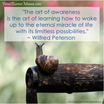 The Art Of Awareness Is The Art OF LEaring How To Wake Up To The Eternal Miracle of Life With Its Limitless Possibilities. - Wilfred Peterson