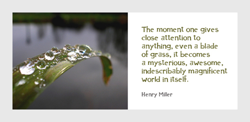 The Moment One Gives Close Attention To Anything Even A Blade Of grass, It becomes A Mysterious, Awesome, Indescribably Magnificent World In Itself. - Henry Miller - Awareness