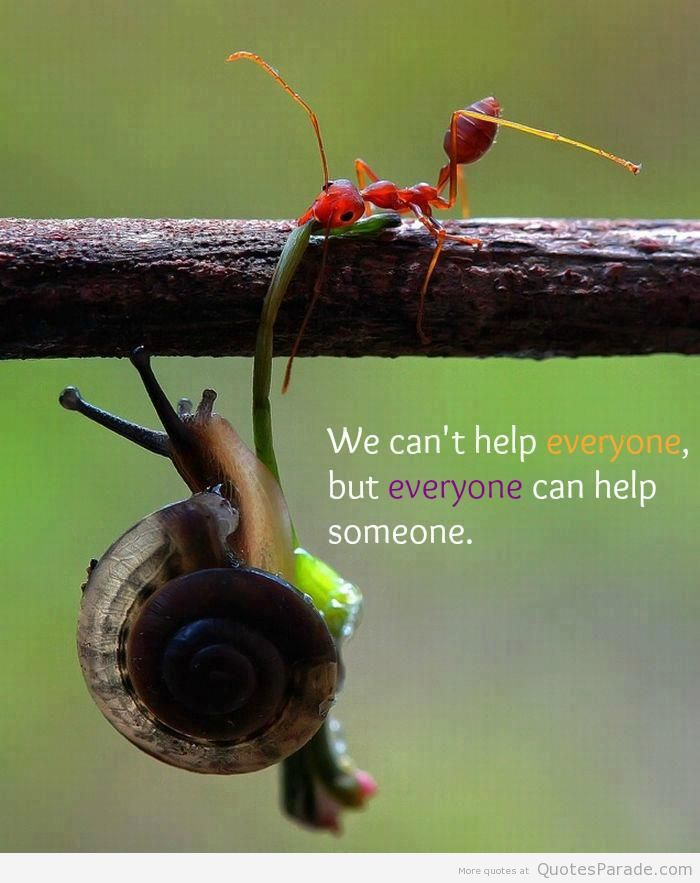 We Can't help Everyone, But Everyone Can help Someone. - Character Quotes