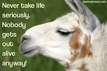 Best Funny Life Quotes - Nevere take life seriously