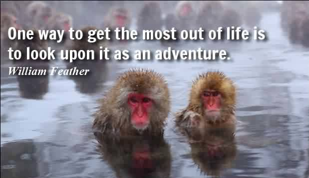 Famous quotes about Life - One way to get the most out of life is to look upon it as an adventure by William Feather
