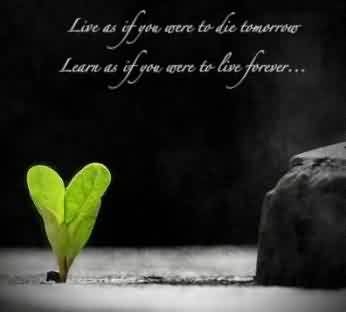 New short Quotes about Life - Live as if you are to die tommorrow, Learn as if you are to Live forever
