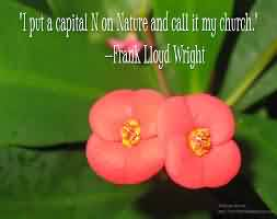 Nice Church Quote By Frank Lloyd Wright~ I put a capital N on Nature and call it my Church