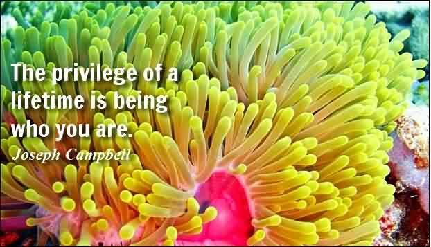 Nice Life Quotes - The privilege of a lifetime is being who you are by Joseph Campbell