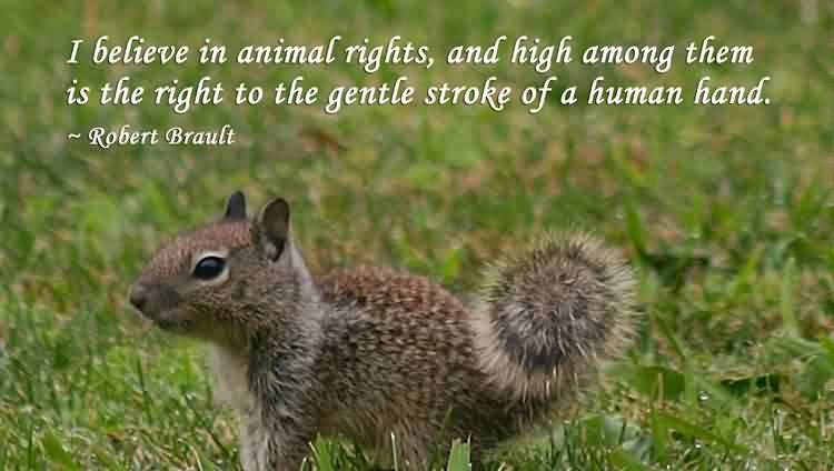 animal-rights-quote.jpg