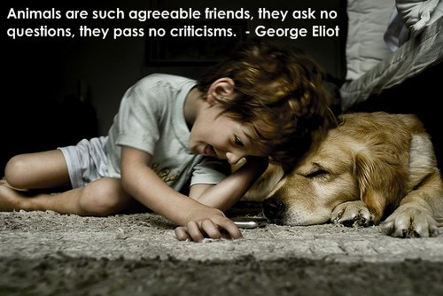 animals-quote-are-friends.jpg