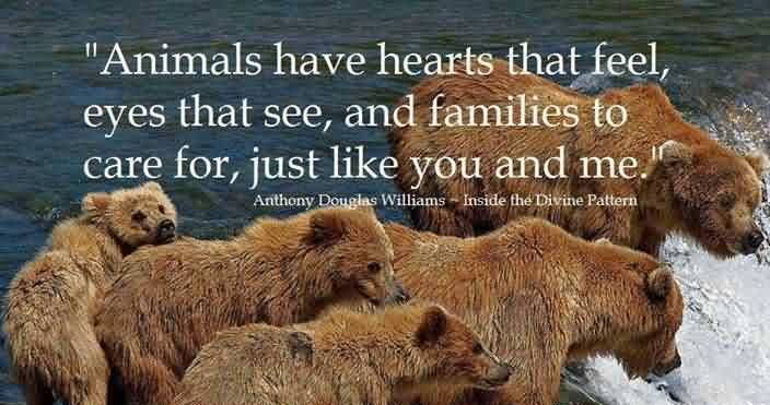 animals-quote-have-hearts.jpg