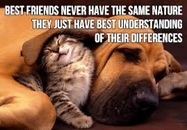 Cute Animal Quote Best Friends Never Have The Same Nature