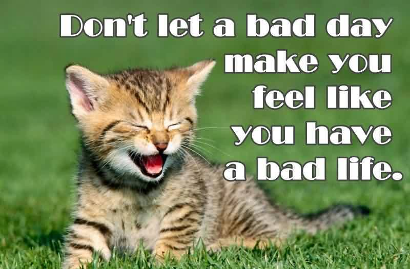 best-motivational-quote-cat-picture-about-life.jpg