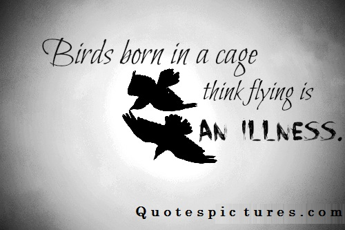 The Human Soul Is Like A Bird That Is Born In A Cage: (257 Quotes) Sayings Images About Birdwatchers
