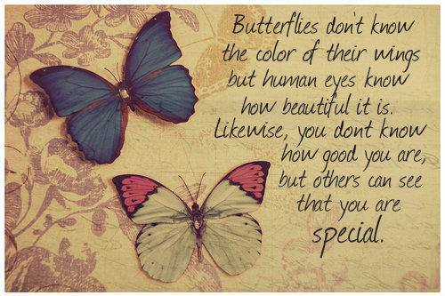 butterflies-not-know-color-of-wings.jpg