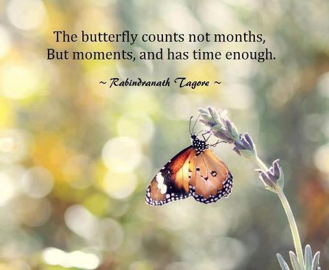 butterfly-counts-not-months-quote.jpg