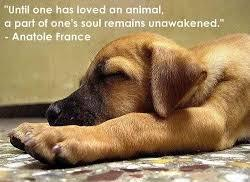 cute-dog-animal-quote.jpg