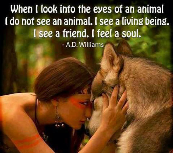 eyes-of-animal-quote.jpg