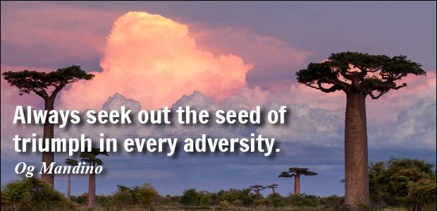 seek-out-seed-of-triumph-in-adversity.jpg