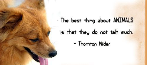 thing-about-animals-quote.jpg