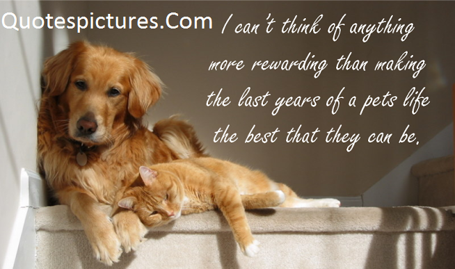 Animal Quotes - Advantages Of Adopting A Senior Pet