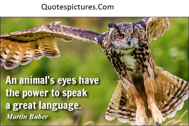 Animal Quotes - An Animal Eye's To Speak A Great Language By Martin Buber