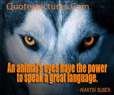 Animal Quotes - An Animal's Eyes Have The Power By Martin Buber