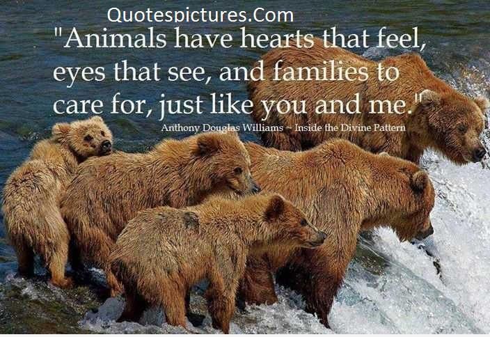 Animal Quotes -  Animals Have Hearts That Feel, Just Like You And Me By Anthony Douglas Williams